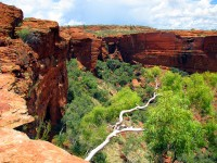 Essential Tips for Travelling in Australia's Outback