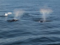 Top Places for Whale Watching in Australia